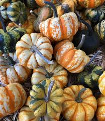 Sacramento Pumpkin Patch With Petting Zoo by Photos For Live Oak Canyon Pumpkin Patch And Christmas Tree Farm