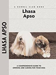 My Lhasa Apso Is Shedding Hair by The Lhasa Apso Big Sassy Diva Personality In A Small Body