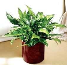 Captivating Small Desk Plants Full Image For Small fice Plants