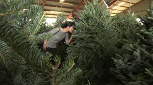Christmas Tree Shop Deptford Nj Number by Thousands Of Bugs Could Be Lurking In Your Christmas Tree Abc13 Com