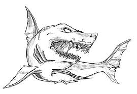 Shark Jaws Sketch Coloring Pages Shark Jaws Sketch Coloring Pages