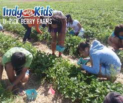 Pumpkin Patch Indianapolis Area by Indy With Kids