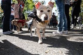 Tompkins Square Park Halloween Dog Parade 2016 by Tompkins Square Park Halloween Dog Parade 2012
