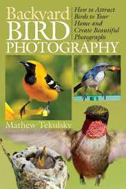 Amazon.com: Backyard Bird Photography: How To Attract Birds To ... Marketplace Audubon Mason Bees Backyard Bird Shop Sibleys Birds Of The Midatlantic Southcentral States Amazoncom In Garden Wall Calendar 2018 Home Page The House Ny 97 Best Michaels Craft Store Coupons Discounts Images On Wild Fersbirdseed Blendsnature 25 Unique Birds Unlimited Ideas Pinterest Stained Glass Patterns 01557013429 Predator Guide Protect Your Yard Little Book Songs Andrea Pnington Caz