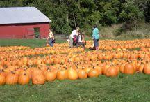 Pumpkin Farms In Channahon Illinois by Dollinger Family Farm Dollingerfarm On Pinterest
