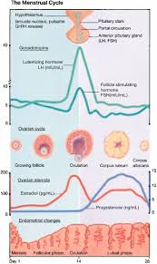 Shedding Of Uterine Lining Before Period by Menstrual Disorders Articles Pediatrics In Review