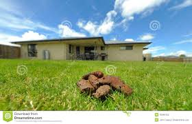 Dog Poo In Backyard Stock Photography - Image: 18346152 Keep Odors Locked Inside With The Poovault Best 25 Dog Run Yard Ideas On Pinterest Backyard Potty Wichita Kansas Pooper Scooper Dog Poop Cleanup Pet Pooper Scoop Scooper Service Waste Removal Doodycalls Doodyfree Removalpooper 718dogpoop Outdoor Poop Garbage Can This Is Where The Goes 10 Tips To Remove Angies List Top Scoopers Reviewed In 2017 Backyards Wonderful 1000 Ideas About Backyard Basketball Court Station Bag Dispenser I Could Totally Diy This For A