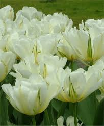 11 best bulbs images on