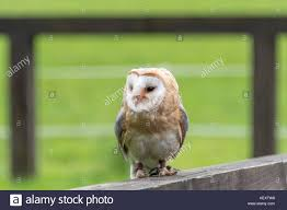Cave Owl Stock Photos & Cave Owl Stock Images - Alamy Watch The Secret To Why Barn Owls Dont Lose Their Hearing 162 Best Owls Images On Pinterest Barn And Children Stock Photos Images Alamy Owl 10 Fascating Facts About Species List Az 210 Birds Drawing Photographs Of Cave By Tyler Yupangco 312 Beautiful Birds