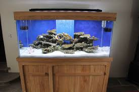 38 Gallon Aquarium Stand Pine Aquarium Stand 29 Gallon Fish Tank ... Cuisine Okeanos Aquascaping Custom Aquariums Fish Tanks Ponds Aquarium Design Group Aquarium Modern Awesome Home Photos Decorating Ideas Office Tank Dental Vastu Location Coffee Table For Sale Beautiful Fish Tank Designs Dawnwatsonme For Luxury Townhouse In Ldon Best Designs And Landscaping Including Fishy Business Cool Images Inspiration Tikspor