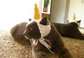 costume for cat unicorn cat costume for cat hat cat clothes cat pet
