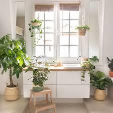 die besten pflanzen für dein badezimmer bergamotte