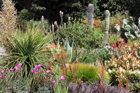 Plant Collections at Mendocino Coast Botanical Gardens Home