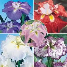 cheap iris sale find iris sale deals on line at alibaba