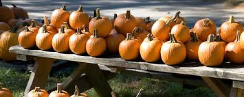 Pumpkin Patch Pasadena Area by Upcoming Events And Things To Do In L A With Kids L A Parent