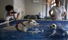 animaux maisons alfort centre de remise en forme animalier