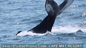 Young Whales Coupon Code / Best Hybrid Car Lease Deals
