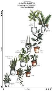 pflanzen im schlafzimmer pflanzenimschlafzimmer plants in