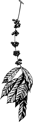 Free Clipart Coffee Plant