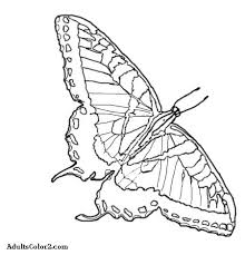 Butterfly Coloring Pages Airborne Art