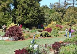 Mendocino Coast Botanical Gardens Fort Bragg 101 Things To Do