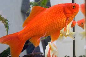 aquarium poisson prix prix d un poisson aquarium poisson avec filtre vrac it