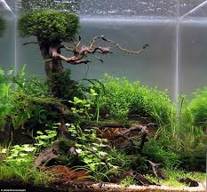 Tag: Aquascaping - Hortist Pin By Ally Bragg On Design Technology Pinterest Planted Everything About Aquascaping The Incredible Undwater Art Basic Forms Aqua Rebell 60 Carpet Carpeting Live Aquarium Plants Aquariums And Ideas From The Of Limnophila Sessiliflora Orange Aquatic Lab Tutorial River Bottom Natural Aquarium Plants Gardens Online Plant Specialist Supplier How To Deal With Algae Love Planting Wiki Styles Aquascapers Suitable