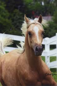 Tims Pumpkin Patch 13110 by 13176 Best Horses We ℒℴѵℯ Images On Pinterest Horses