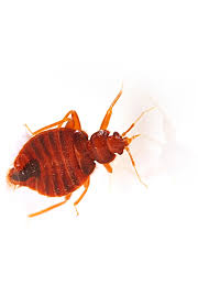 Bed Bug Removal Pest Control DC MD & VA