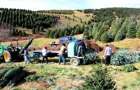 Fraser Christmas Tree Farm by Let U0027s Find The Baler Hart T Tree Farms
