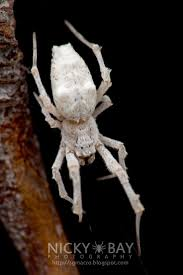 Spirit Halloween Jumping Spider by 1113 Best Animals Invertebrates Spiders U0026 Scorpions U0026 Mites