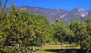 Best Pumpkin Patch In San Bernardino County by San Bernardino County California San Bernardino County