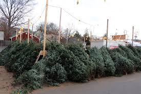 Plantable Christmas Trees For Sale by Where To Buy A Christmas Tree In Arlington Arlnow Com
