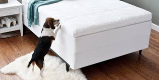 Serta Dog Bed by Serta 2 5 Inch Gel Memory Foam Mattress Topper Review Sleep Is