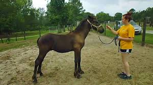 HorseLoverZ Coupons - 0 Hot Deals November 2019 Bullhide Belt Coupons Deals Direct Heaters Equine Couture Joy Saddle Pad Smart Scrubs Promo Code Best Coupons Western Schools Transfer Window Deals 2018 Up To 85 Off Gucci Verified Couponslivesunday Horse Equine Traformations Coupon Advertising Ideas Horseloverz Com Free Shipping August Shrockworks Discount March 2019 Apple Calendar Back In The Saddle Coupon Bob Evans Military Most Updated Lovesaccom Coupon Code 10 15 Horseloverz Competitors Revenue And Employees Owler
