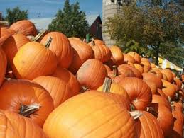 Dollingers Pumpkin Farm Minooka Il by Picking The Perfect Pumpkin Patch Cbs Chicago