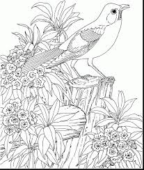 Fantastic Hard Bird Coloring Pages For Adults With Free Printable And