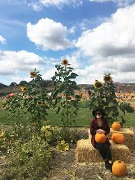 Pumpkin Patch Corona Ca by Lifestyle Loriana Lam