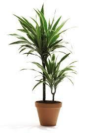 plante dans chambre à coucher les plantes dépolluantes pour la chambre de bébé conseils en