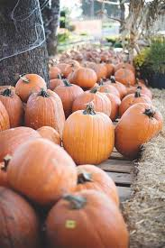 Pumpkin Patches Near Temple Texas by 2015 Fall Festivals In Austin And Beyond Free Fun In Austin