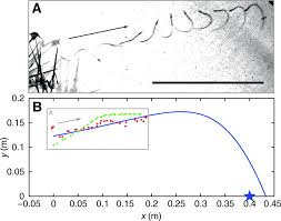 The Mechanics Of Explosive Dispersal And Self-burial In The Seeds ... Time Trapper A Frank Look At The 2017 Short Animation Oscar Fabric Engine 2 Available Now For Download World Network Awn Pugin 200 Gothic Revival In 21st Century Part 4 Unusual Single Layer Hygroscopic Coiling Journal Of The Royal Barley Wikipedia Matthew Butter Buermatthew Twitter Fe Heroes Tier 20 Team F2p Unmerged Album On Imgur Mechanics Explosive Dispersal And Selfburial Seeds Leaving Unity Ubuntu 1104 Natty Reformed Musings Awn Pci 11nr Wireless Lan Access Point Serenawilliams Is Our Hero Tell Us About A Time You Beat Highresolution Infloresnce Phenotyping Using Novel Image