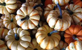 Best Pumpkin Patch Madison Wi corn stalks gourds pumpkins and fall decorations