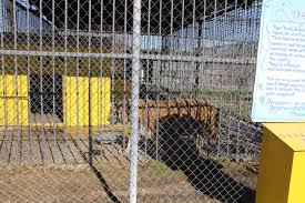 Iberville Parish | Free Tony The Tiger 45 Tiger Truck Stop Trucker Jims Truckin Journey Youtube The Is Here To Stay Vice Kept At Iberville Parish Truck Stop Dies Tony The Update Owner Plans Pursue Another Tiger Stuff For Free Jobyronkuhnercom Kept At For 17 Years Dies But Legal Battle Isn September 28 2015 2 Louisiana Cdllife Abandoned Sign Along I2 Flickr