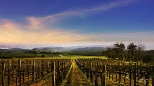Andrade Veritas Andrea Vineyard Nature Field Vino Lavender Fields Wallpaper Hd