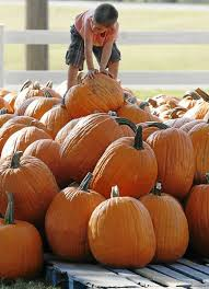 Sand Springs Pumpkin Patch by Your Guide To Halloween Parties Parades Pumpkin Patches And