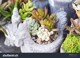100 Fresh Home And Garden Flowers Clay Pot Decoration Stock Photo Edit Now