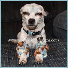 posh pooch designs dog clothes how i design and a free cute pattern