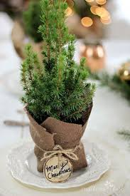 Plantable Christmas Trees Nj by The 25 Best Potted Christmas Trees Ideas On Pinterest Clay Pots