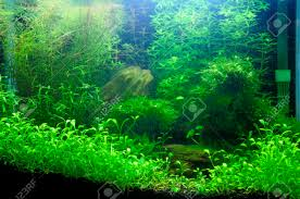 Aquascaping Images & Stock Pictures. Royalty Free Aquascaping ... An Inrmediate Guide To Aquascaping Aquaec Tropical Fish Most Beautiful Aquascapes Undwater Landscapes Youtube 30 Most Amazing Aquascapes And Planted Fish Tank Ever 1 The Beautiful Luxury Aquaria Creating With Earth Water Photo Planted Axolotl Aquascape Tank Caudataorg 20 Of Places On Planet This Is Why You Can Forum Favourites By Very Nice Triangular Appartment Nano Cube Aquascape Nature Aquarium Aquascaping Enrico A Collection Of Kristelvdakker Pearltrees