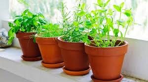 kräuter pflanzen für die küche